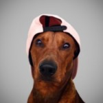 Profilbild von Finn