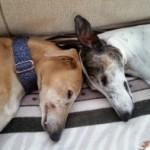 Profilbild von Elli und Nala