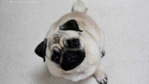 Dr. Google, der Arzt dem die Hundebesitzer (nicht) trauen