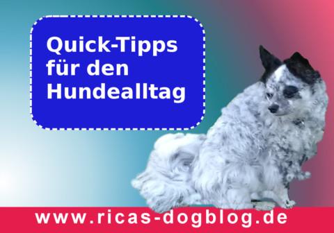 Quick-Tipps für den Hundealltag: Erste Hilfe bei leichter Magenverstimmung