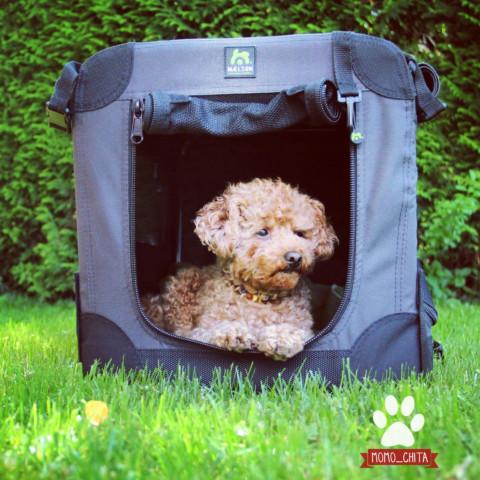Rückzugsort Hundebox – Hundhochdrei