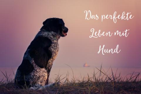 Das Traumleben mit Hund