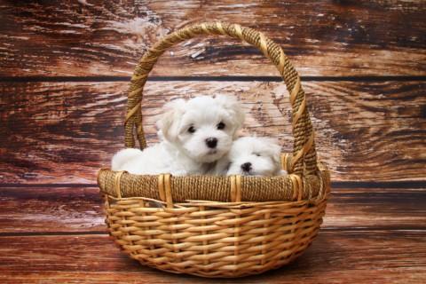 Der Umzug mit einem Hund