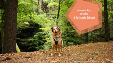  unterwegs  Urlaub mit Hund in Dresden und der Sächsischen Schweiz