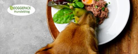 Gesund füttern – aber bitte ohne Stress! Teil 1