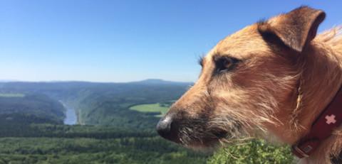 Wandern im Elbsandsteingebirge – Part 4