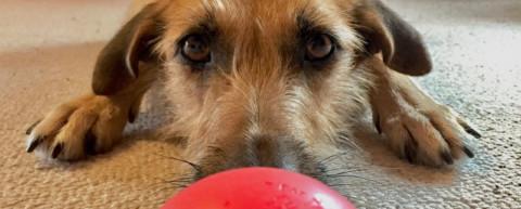 Hund und Job – wie geht das? Part 1 [miDoggy Parade]