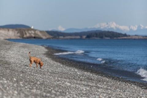 Fit im Urlaub – mit 5 Minuten täglich mehr Fitness für deinen Hund –Teil 2