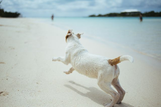 Hund weiss am strand