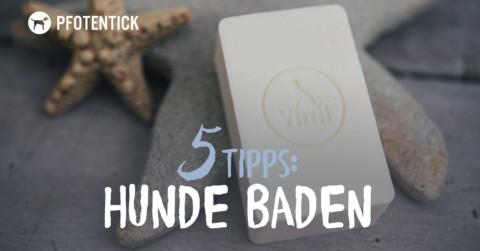 Waschtag – 5 Tipps zum Baden von Hunden