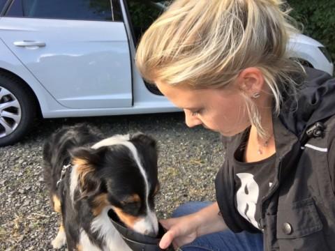 Erste-Hilfe am Hund – Hitzschlag