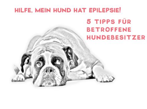 Hilfe, mein Hund hat Epilepsie! – 5 Tipps für betroffene Hundebesitzer