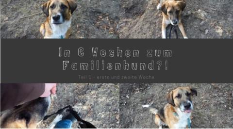 In 6 Wochen zum Familienhund? – Teil 1