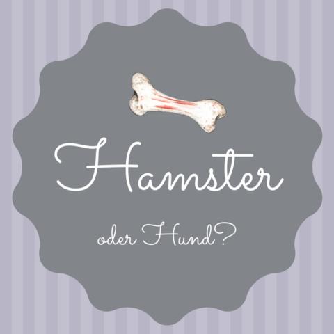 Hamster oder Hund?