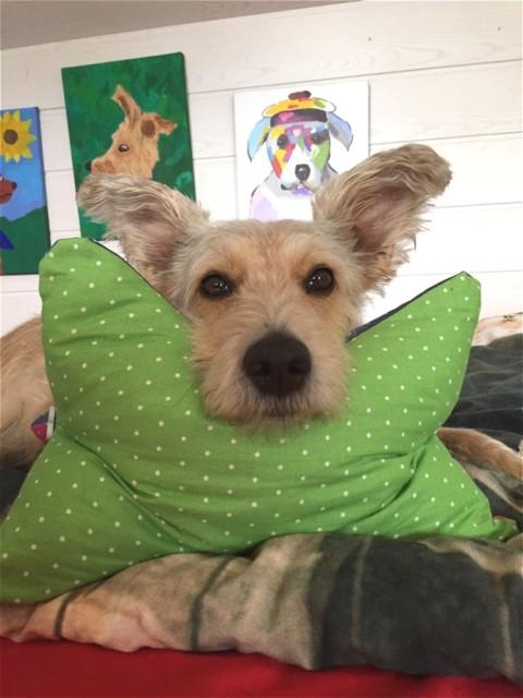 miDoggy Parade: Hund im Bett
