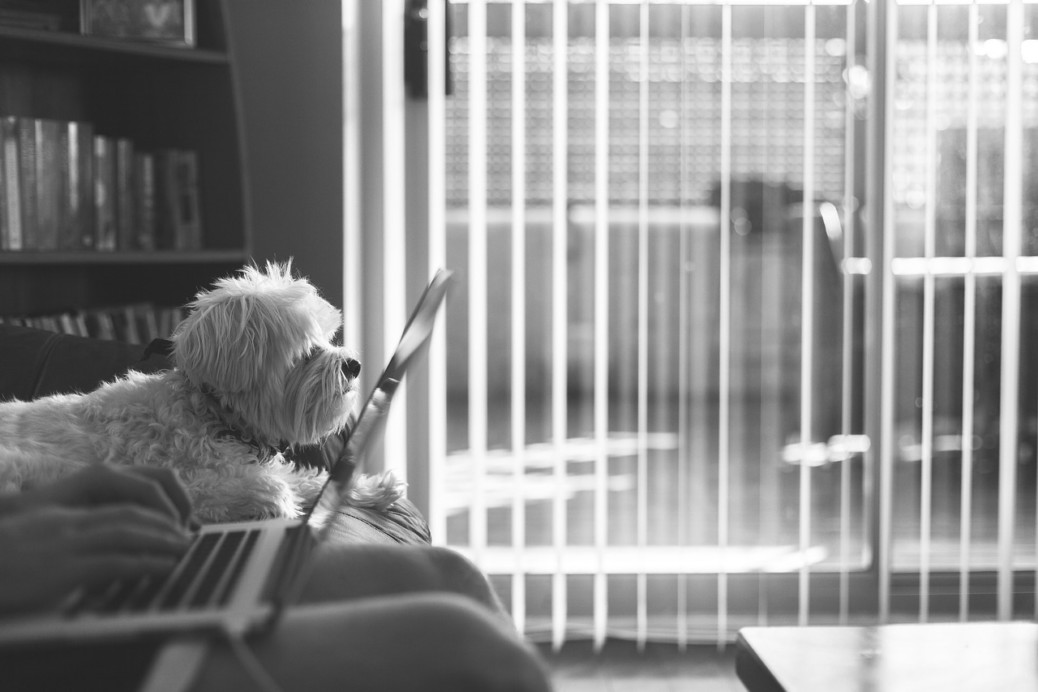 Hund und Job wie geht das