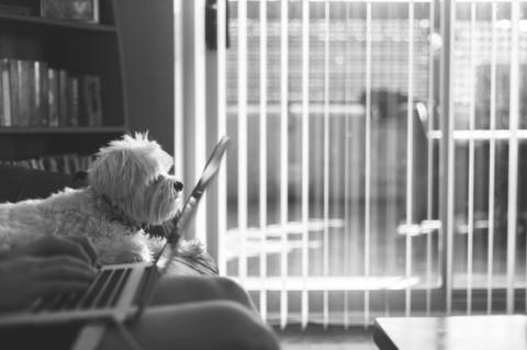 Voll berufstätig & Hund &glücklich?