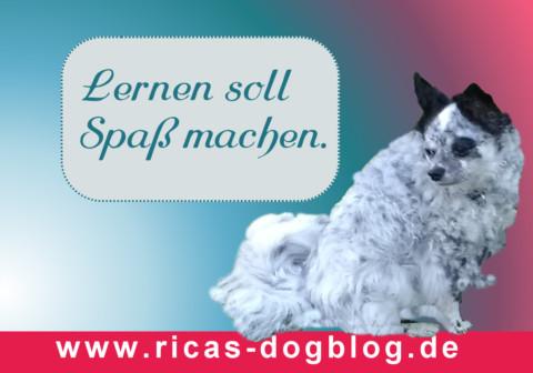Hundetraining: 7 Tipps für mehr Spaß und Erfolg beim Lernen
