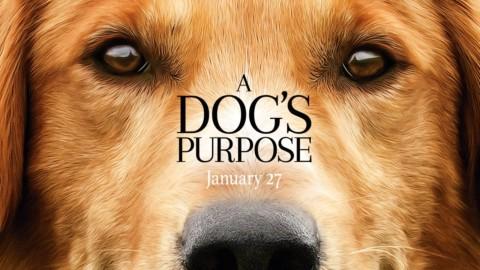 A Dog's Purpose – ohne mich