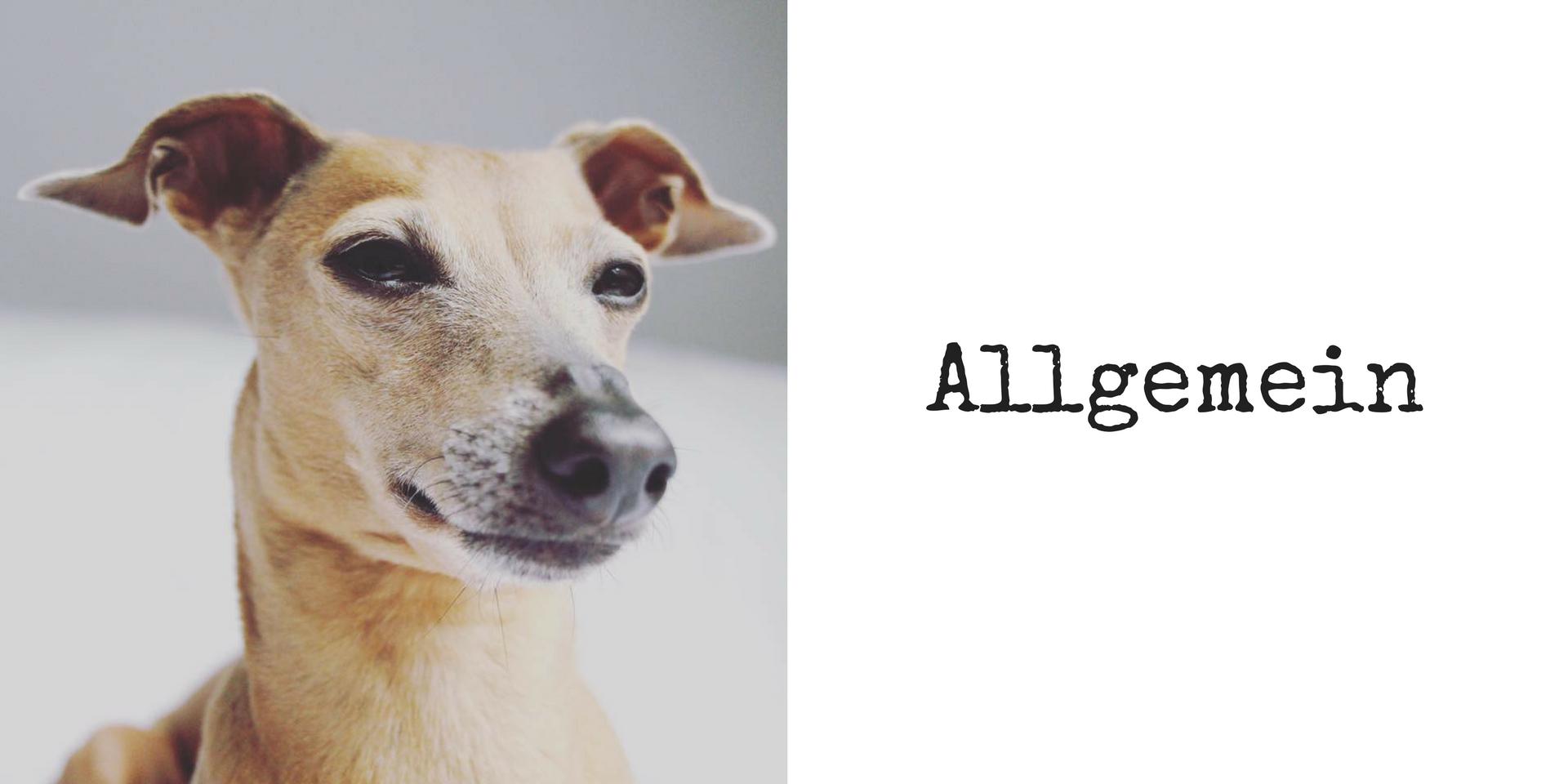 miDoggy Blog Community für Hunde Allgemein