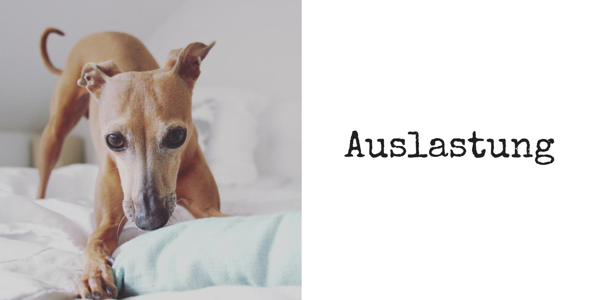 miDoggy Blog Community für Hunde Auslastung