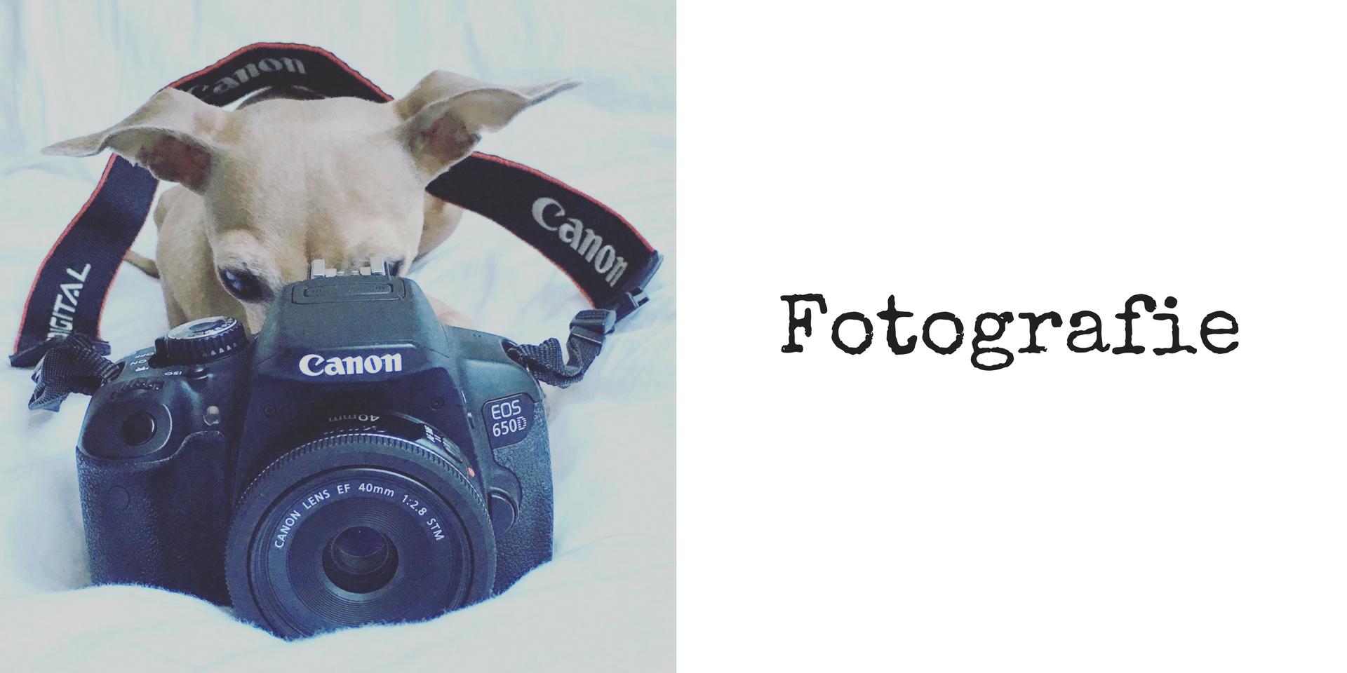 miDoggy Blog Community für Hunde Hundesport