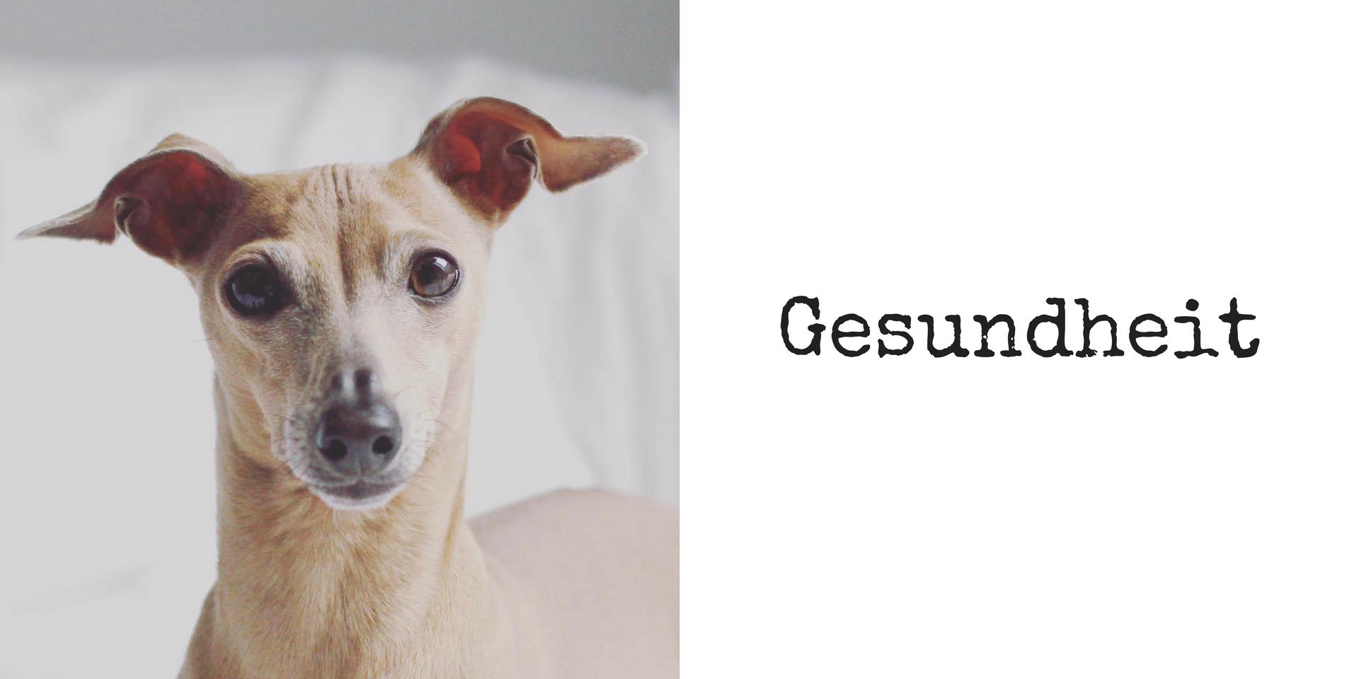 miDoggy Blog Community für Hunde Gesundheit