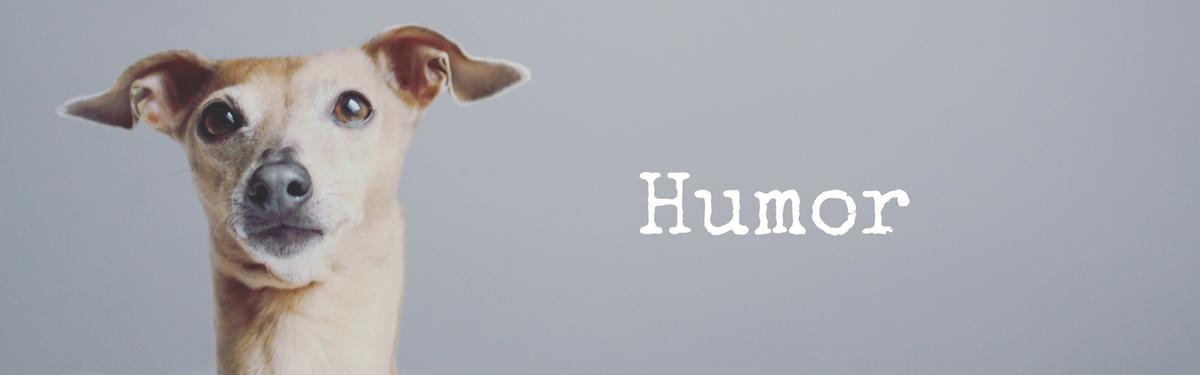 miDoggy Blog Community für Hunde Humor lustig