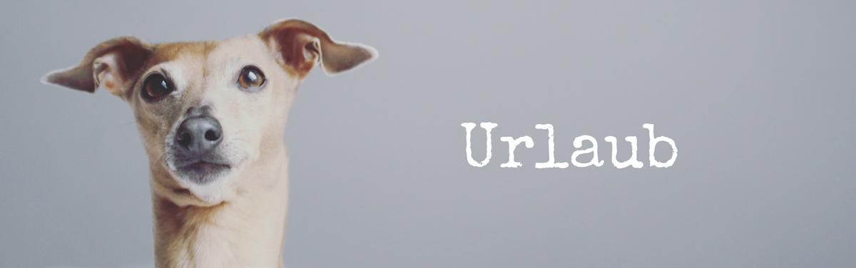 miDoggy Blog Community für Hunde Urlaub mit Hund