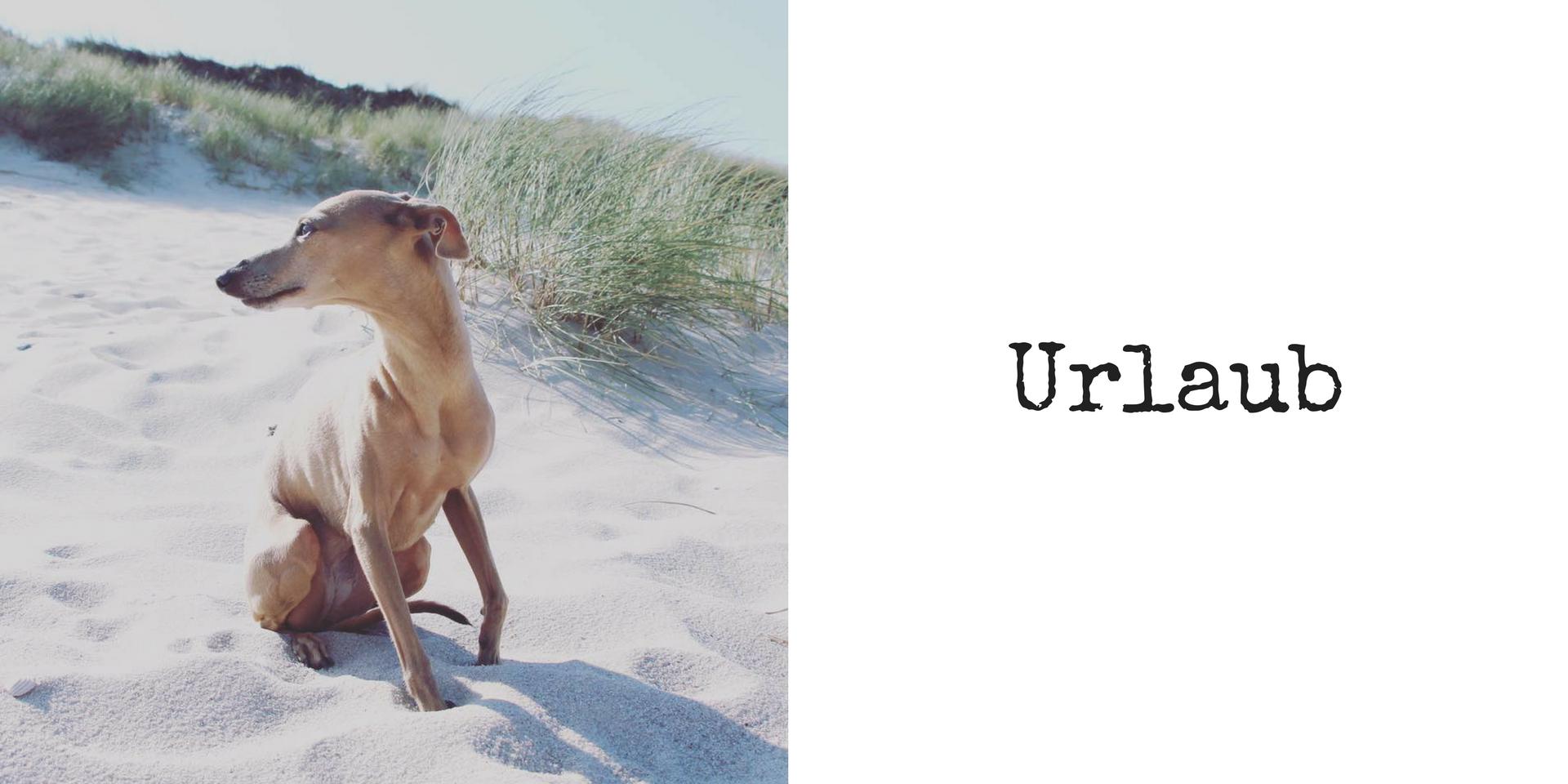 miDoggy Blog Community für Hunde Urlaub