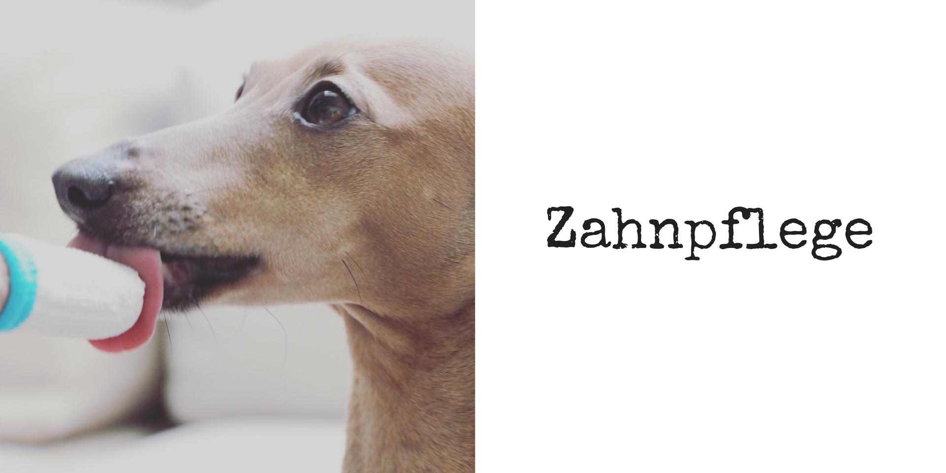 miDoggy Blog Community für Hunde Zahnpflege Pflege