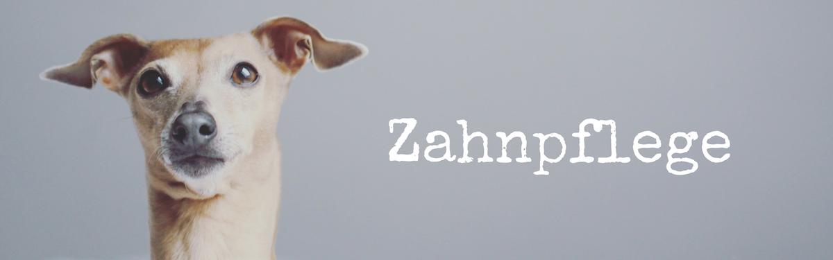 miDoggy Blog Community für Hunde Zahnpflege