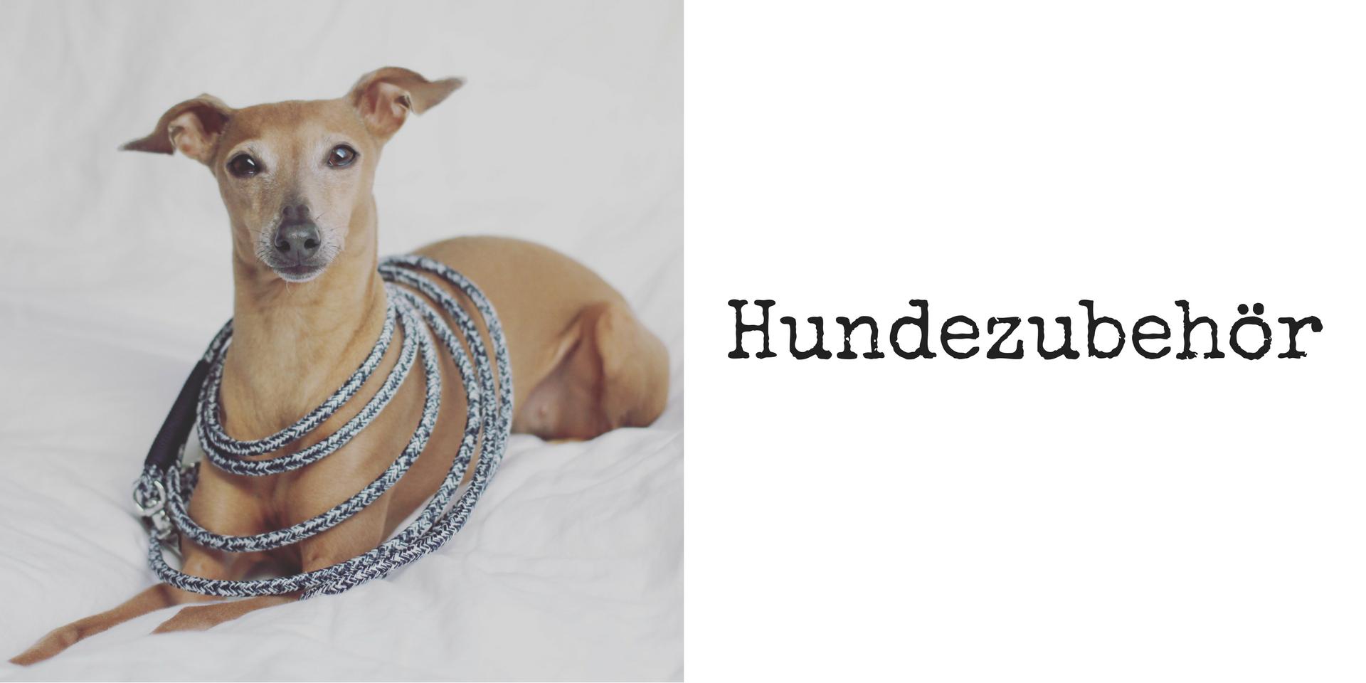 miDoggy Blog Community für Hunde Zubehör