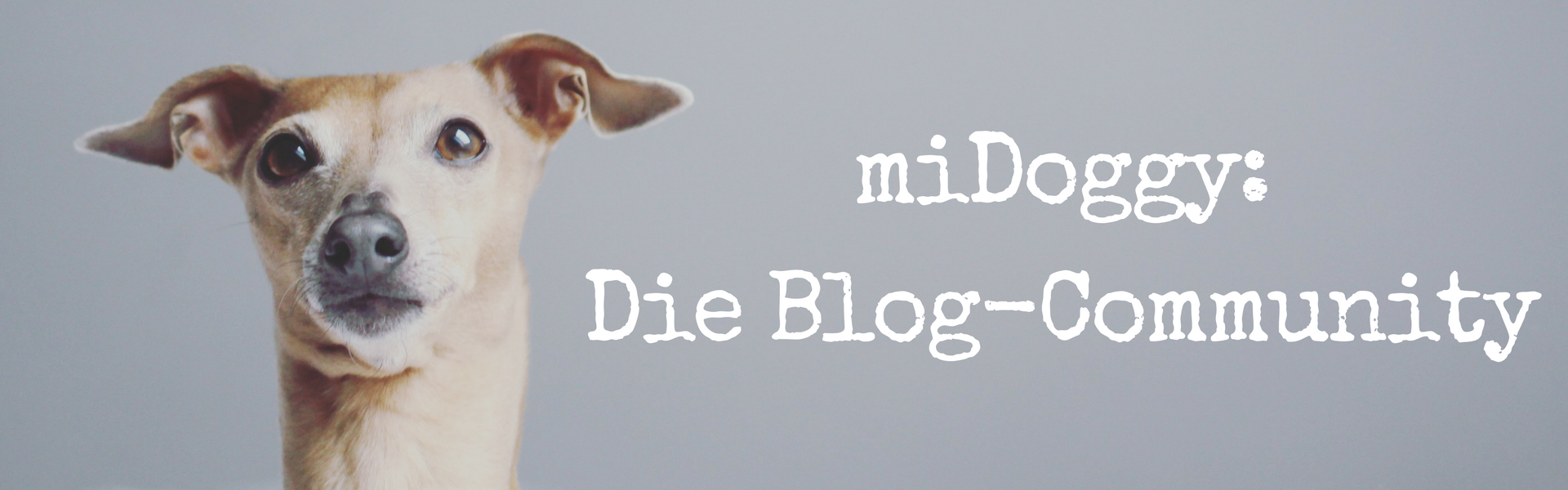 miDoggy Blog Community für alle Hunde und Hundebegeisterte
