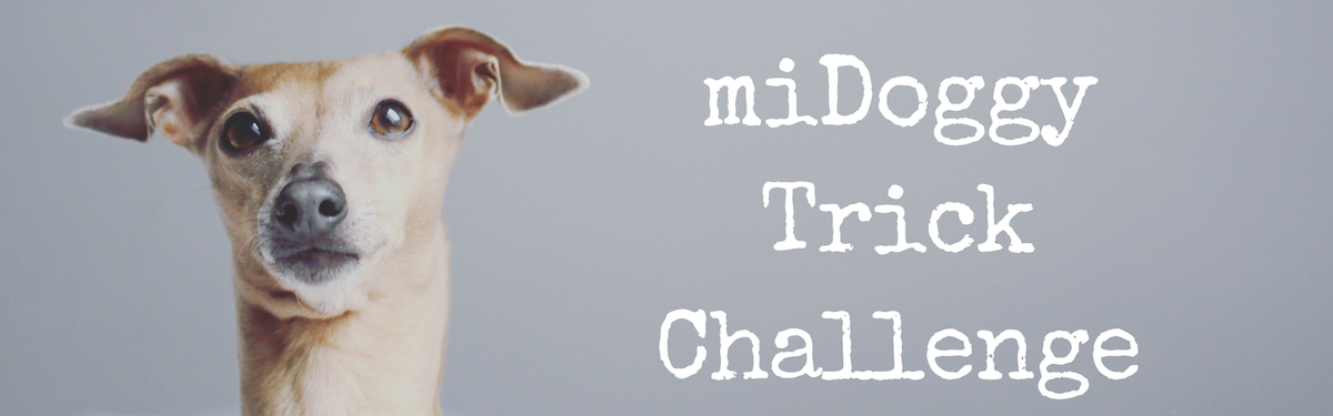 miDoggy Trick Challenge