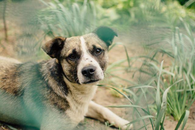 Schmerzen beim Hund lindern
