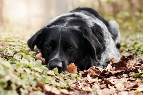 Lieblingsdinge für den Hund – Was brauchen wir wirklich?