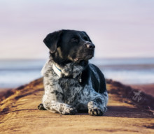 Lieblingsaktivitäten mit dem Hund