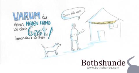Warum dein neuer Hund wie ein Gast ist