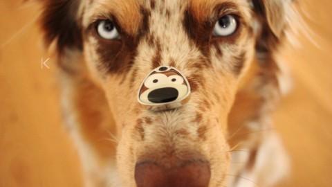 |test| Dank Hundemarke von Petfindu sicher unterwegs