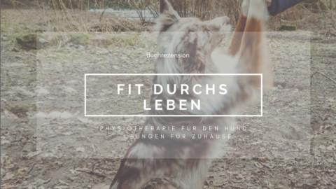 Physiotherapie für den Hund – Übungen für Zuhause