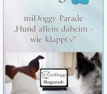 """miDoggy Parade """"Hund allein daheim – wie klappt's?"""""""