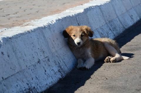 Ein kleiner Hund im Himmel