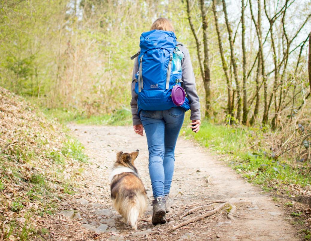 Wandern mit Hund in der Eifel