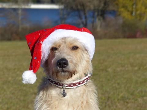 Blogparade: Keine Tiere unterm Weihnachtsbaum