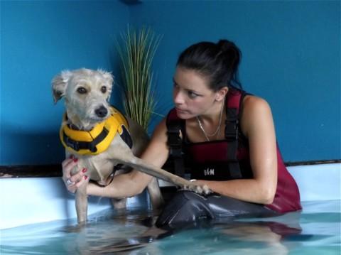 Der letzte Hund im Pool