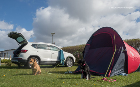 Vom Winde verweht in Nordholland: Pop-up-Zelt versus Camping-Ateca