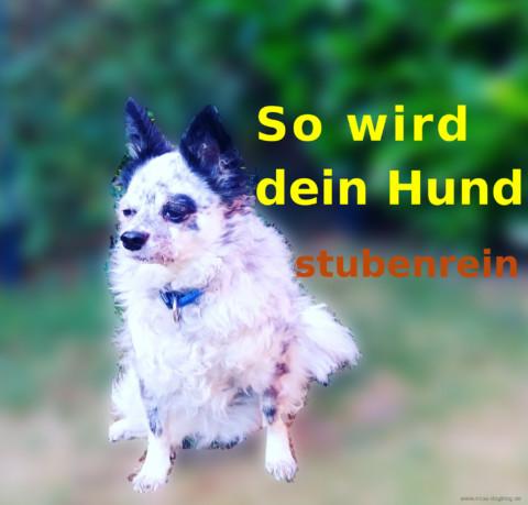So wird dein Hund stubenrein