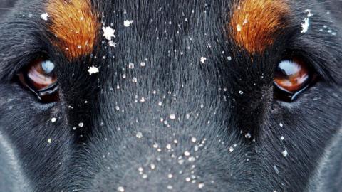 3 Gründe, warum Hunde die besseren Menschensind!