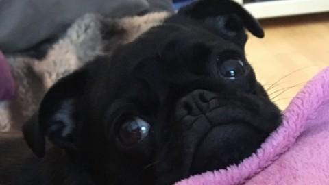 Wunderwuzi Hund – oder die eierlegende Wollmilchsau